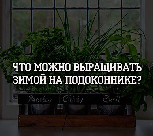 Что можно выращивать зимой на подоконнике